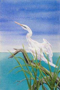 Seabirds at Noon I