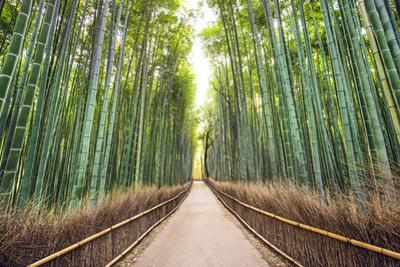 Bamboo Forest of Kyoto, Japan. by SeanPavonePhoto