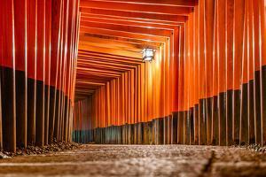 Fushimi Inari Taisha Shrine Torii Gates in Kyoto, Japan. by SeanPavonePhoto