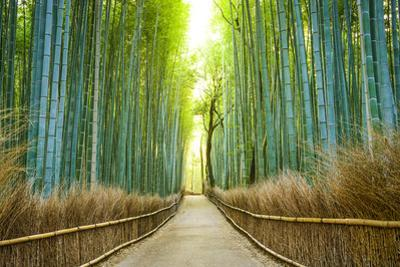 Kyoto, Japan Bamboo Forest. by SeanPavonePhoto