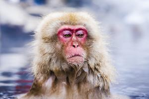 Macaques Bath in Hot Springs in Nagano, Japan. by SeanPavonePhoto
