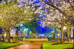 Macon, Georgia, USA Downtown with Spring Cherry Blossoms at 3Rd Street Park. by SeanPavonePhoto