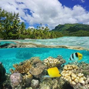 Above and Below Water Surface, Lush Shore with Coral and Tropical Fish, French Polynesia by Seaphotoart