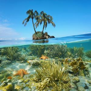 Split Image over and under Sea Surface, an Islet with Two Coconut Trees Above and Corals Below by Seaphotoart