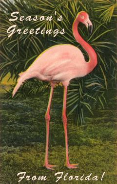 Season Greetings from Florida, Flamingo