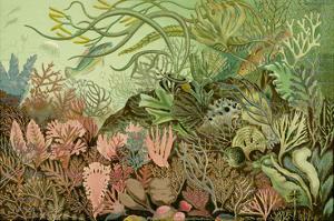 Seaweed Panorama
