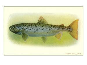 Sebago Salmon