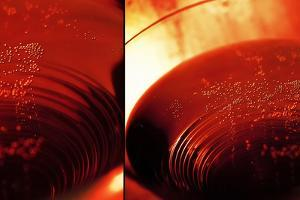 Red Champagne by Sebastien Lory