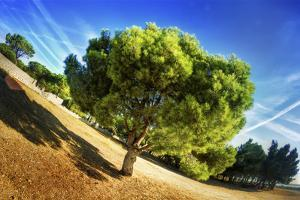Summer Tree by Sebastien Lory