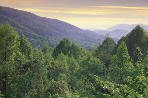 secondary forest, great smoky mountains national park, usa