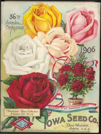 Seed Catalog Captions (2012): Iowa Seed Co. Des Moines, Iowa. 36th Annual Catalogue, 1906