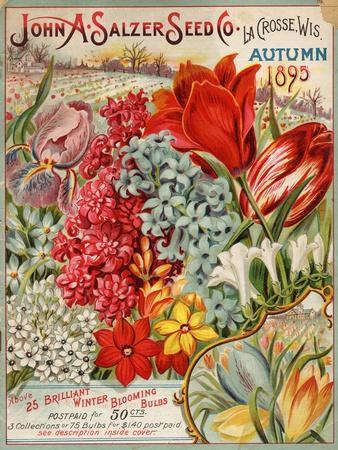 https://imgc.allpostersimages.com/img/posters/seed-catalog-captions-2012-john-a-salzer-seed-co-la-crosse-wisconsin-autumn-1895_u-L-Q1BAKQ00.jpg?p=0
