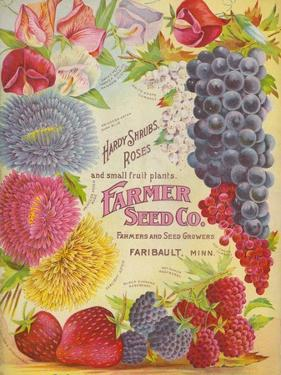 Seed Catalogues: Farmer Seed Co. Farm and Garden Seeds, Spring 1906