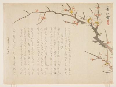 Flowering Plum, January 1837