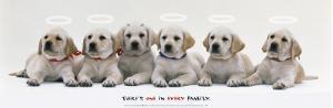 Every Family by Sekai Bunka