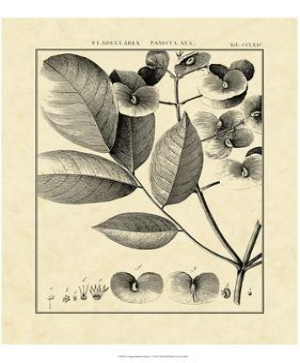 Vintage Botanical Study V by Sellier