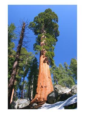 Sequoia National Park II