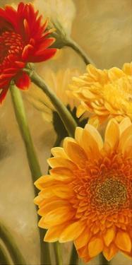 Gerbere nel sole I by Serena Biffi