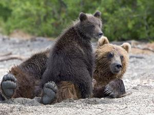 Brown Bear (Ursus Arctos) Mother and Cub, Kamchatka, Russia by Sergey Gorshkov/Minden Pictures