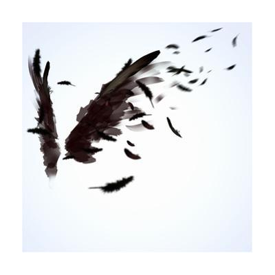 Black Wings by Sergey Nivens