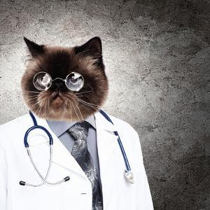 Funny Fluffy Cat Doctor In A Robe And Glasses. Collage by Sergey Nivens