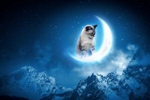 Image of Cat in Jump Catching Moon by Sergey Nivens