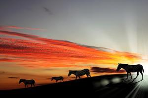 Zebras Agaisnt Sky Background by Sergey Nivens