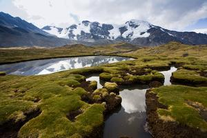 A Bog Lies across the Way from Mt. Sunchuli and Reflects the Peaks of the Apolobamba Range, Bolivia by Sergio Ballivian