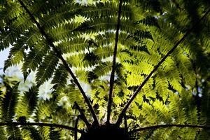 An Abstract Pattern Is Formed by a Tree in Te Urewera National Park on New Zealand's North Island by Sergio Ballivian