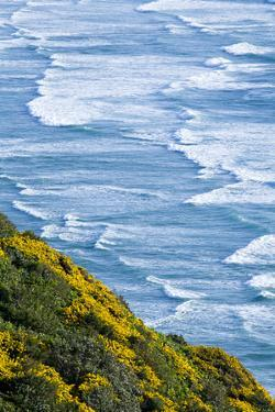Beach and Coastline on the Pacific Ocean Near Florence, Oregon by Sergio Ballivian