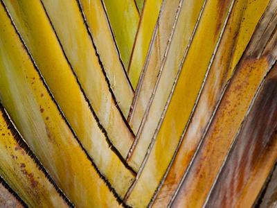Details of a Palm Plant That Has Interlocking Colorful Elements in Miami Beach, Florida.