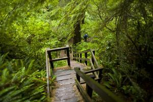 The Stairs and Platforms of the West Coast Trail Along the Pacific Northwest by Sergio Ballivian