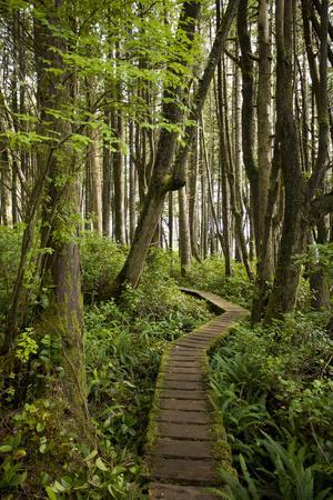 West Coast Trail Along the Pacific Northwest