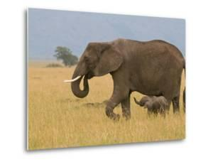 African Elephant and Baby (Loxodonta Africana), Masai Mara National Reserve, Kenya by Sergio Pitamitz