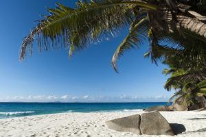 Anse Victorin, Fregate Island, Seychelles, Indian Ocean, Africa by Sergio Pitamitz