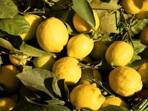 Close-Up of Lemons in the Market, Menton, Provence, Cote d'Azur, France by Sergio Pitamitz
