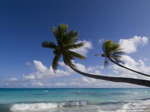Fakarawa, Tuamotu Archipelago, French Polynesia, Pacific Islands, Pacific by Sergio Pitamitz