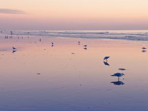 Huntington Beach, California, United States of America, North America by Sergio Pitamitz