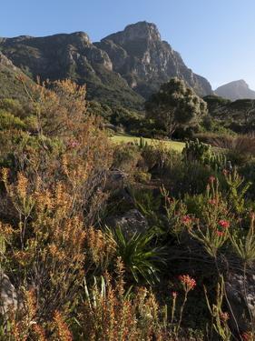 Kirstenbosch National Botanical Garden, Cape Town, South Africa, Africa by Sergio Pitamitz