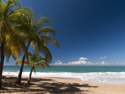 La Perle Beach, Deshaies, Basse-Terre, Guadeloupe, French Caribbean, France, West Indies by Sergio Pitamitz