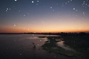 Thousand of Insects Flying Over the Chobe River at Sunset by Sergio Pitamitz