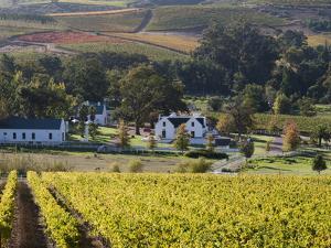 Zorgvliet Wine Estate, Stellenbosch, Cape Province, South Africa, Africa by Sergio Pitamitz