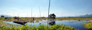 Inle Lake Myanmar, Shan State. Floating Gardens of Rural Intha Village Farms on Water. Eco Nature P by SergWSQ
