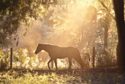 Horse Backlit at Sunset by Seth Christie