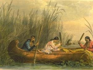 Gathering Wild Rice, 1853 by Seth Eastman