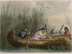 Gathering Wild Rice by Seth Eastman