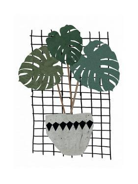 Monstera by Seventy Tree