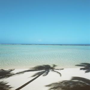 Shadows of Palm Trees on Beach