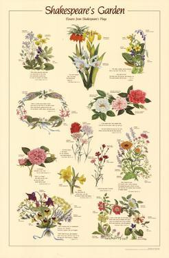 Shakespeare's Garden Flowers From Plays Chart Poster