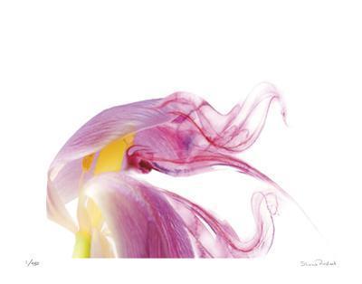 Purple Tulip Abstract No 129